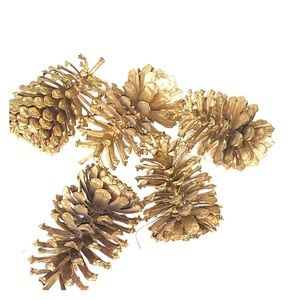 Extra large painted pine cones